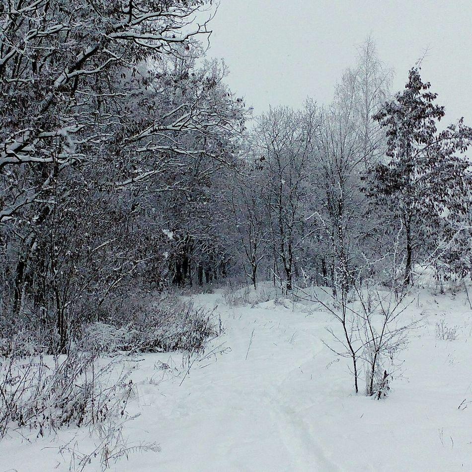 Зимама2015 курск