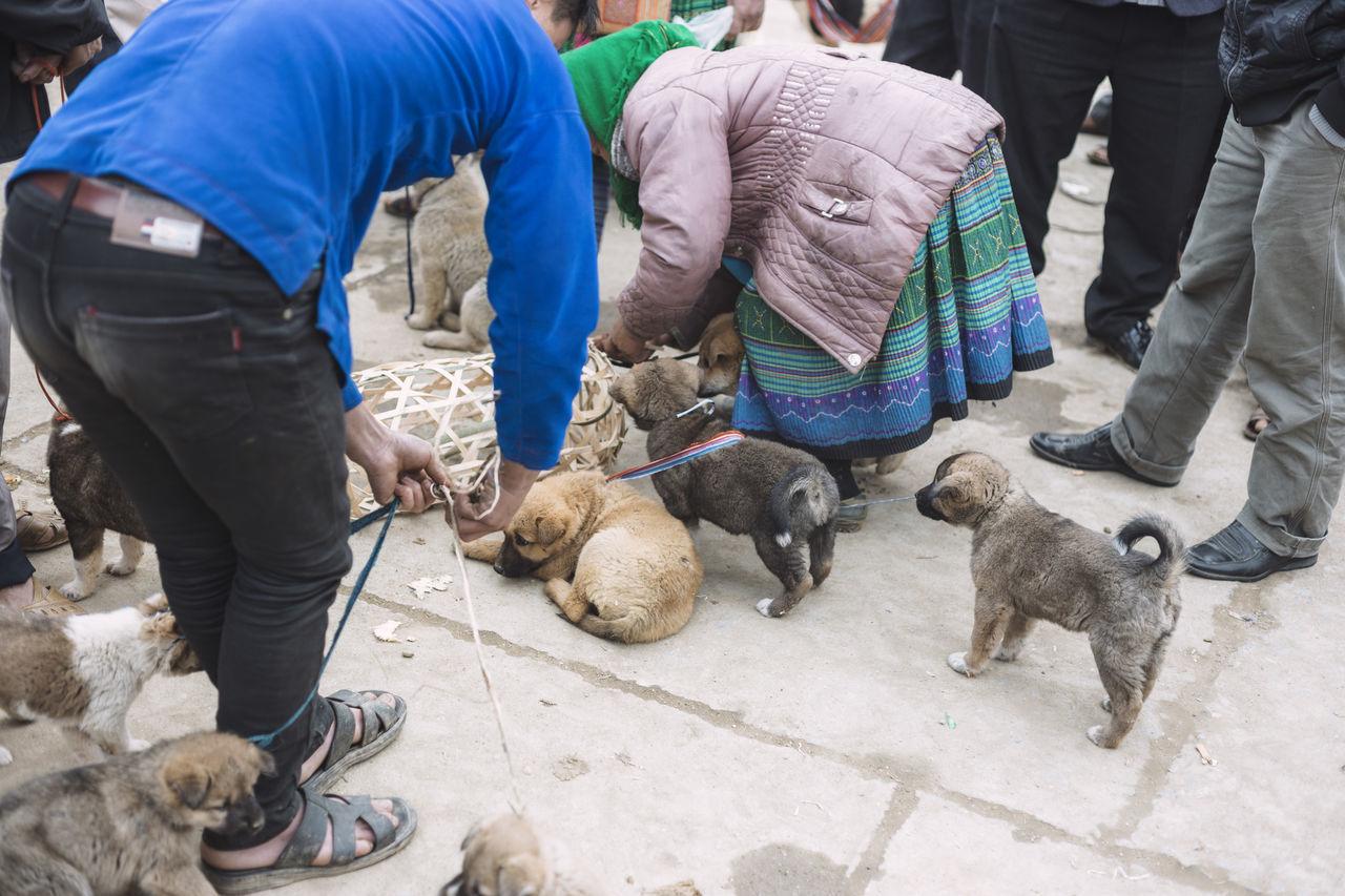 Beautiful stock photos of welpen,  Animal Themes,  Animal Welfare,  Assistance,  Bending Over