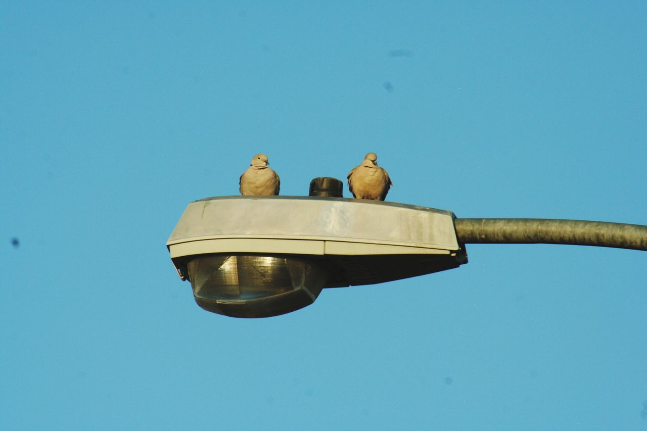 Low Angle View Of Birds On Street Light Against Clear Blue Sky