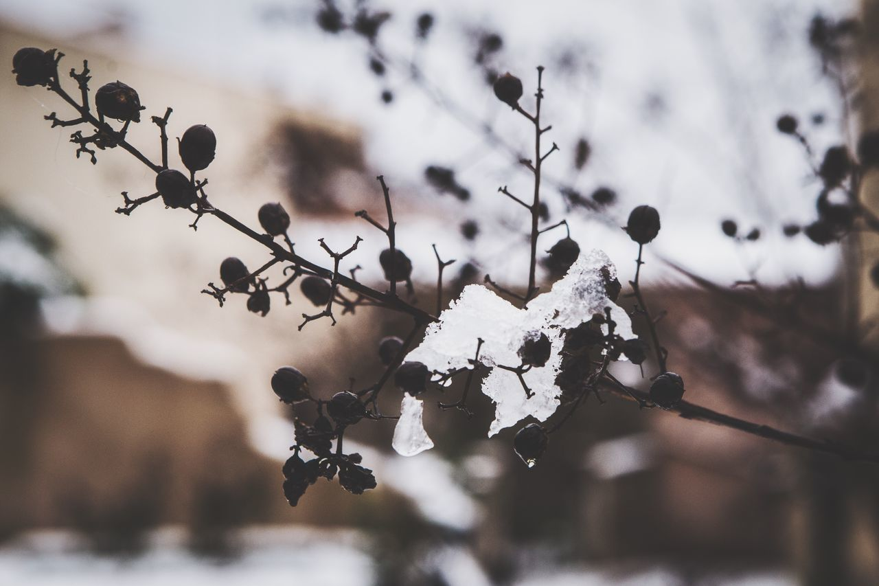 https://youtu.be/wM0daiDlCQ0 Nature Close-up Focus On Foreground Cold Temperature Outdoors Winter No People Snow Beauty In Nature Day Tree Simplicity Eye4photography  Getting Inspired EyeEm Canon EyeEmBestPics EyeEm Best Shots Change Water Fragility EyeEm Gallery Nature Tranquil Scene Silence
