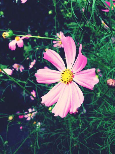 It's my flowers!