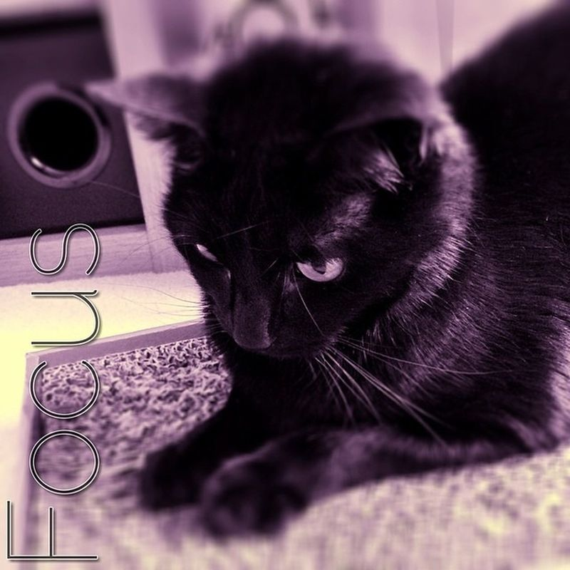 Focus Blackcatsofig Blackcatsofinstagram BLackCat Crazycatlady Crazycatgirl Lovecats Cats Lucky Luckyblackcat Cameraplus K8marieuk Cute Sticky Luckypie Blackcats Photo365