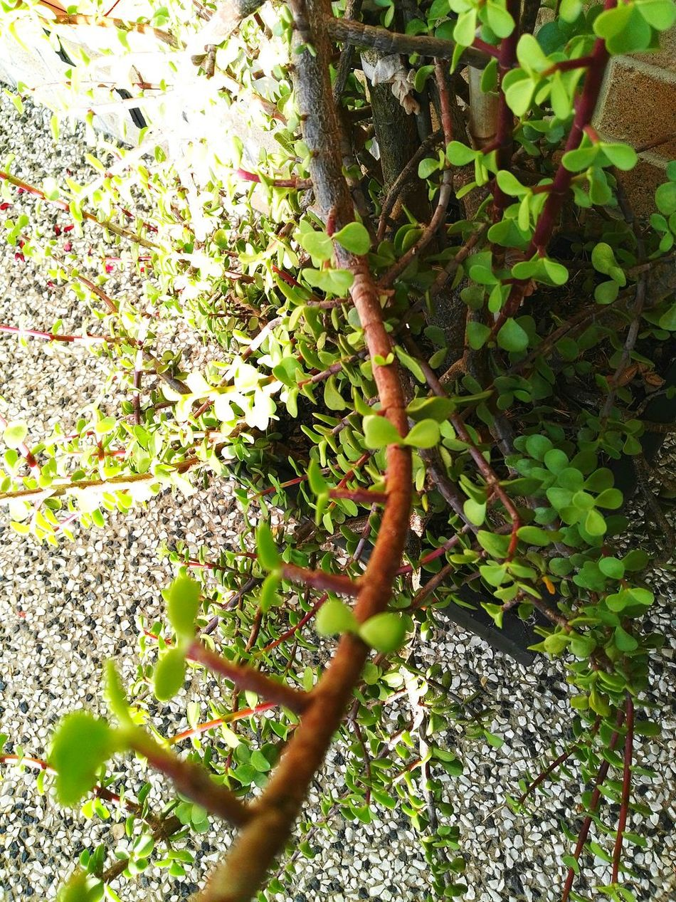 Green Color Nature Growth Close-up Green Leaves Plant Nature Beauty In Nature Succulent Tree Small Tree