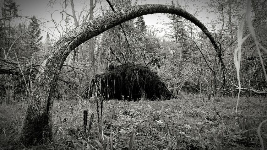 Nature Photography Nature On Your Doorstep StillLifePhotography Blackandwhite Photography