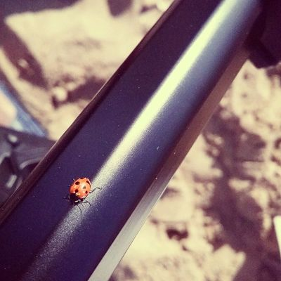 Beach bugs ضوهـ