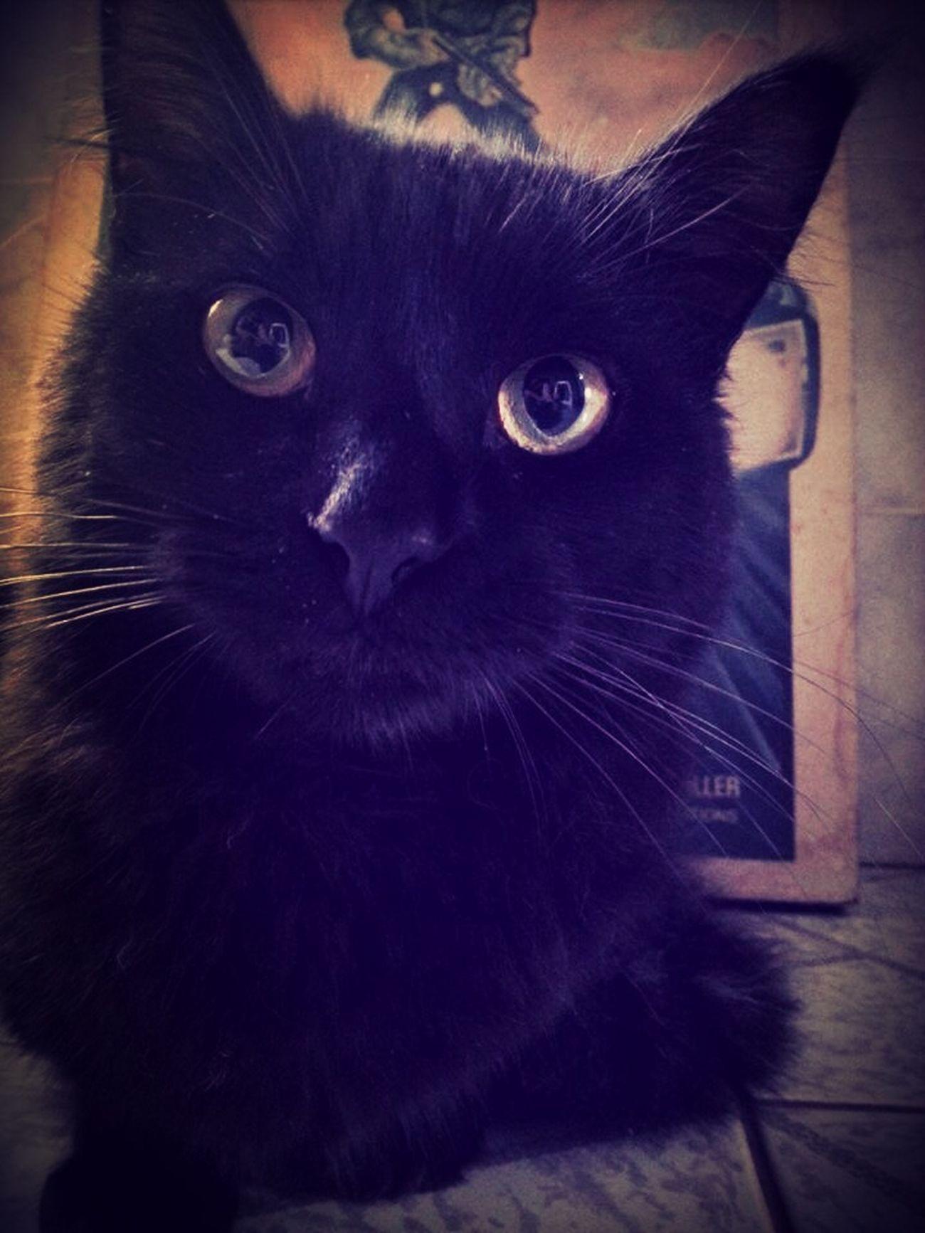 R.I.P. Rouquinho Cat
