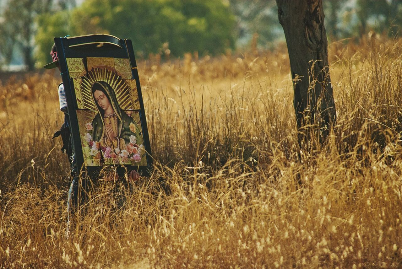 No People Nature Outdoors Tree Day Grass Pilgrimage Pilgrim Virgen De Guadalupe Mexico Walking Alone... Walking Carry On Religious Images Religion And Tradition Fields Of Gold Tree