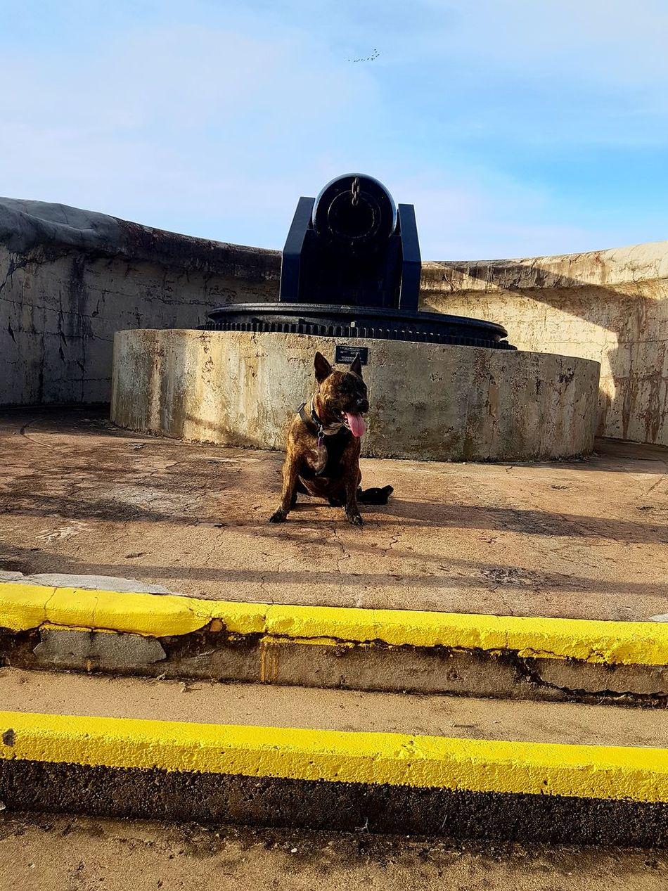 Our Family Dog War Memorialbeside cannon ANZAC Day Australia Animal