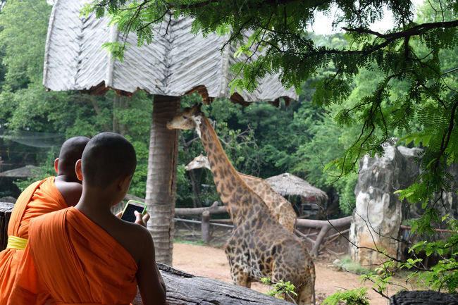 Bangkok Dusitzoo Girraffes Kids Monks Orange Color Rellingen Thailand Zoo