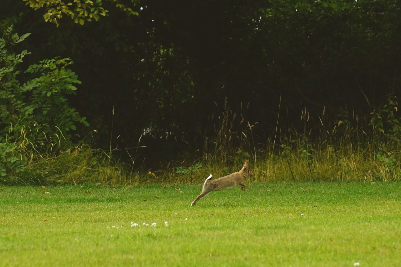 cropped Bunny  Bunnyrabbit Rabbit Mr Rabbit Beautiful Peaceful Place Capturing Movement Life In Motion Running EyeEm Nature Lover