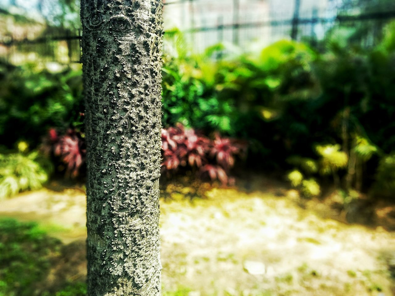 tree trunk, growth, tree, focus on foreground, nature, plant, day, no people, beauty in nature, outdoors, close-up, plant nursery, greenhouse