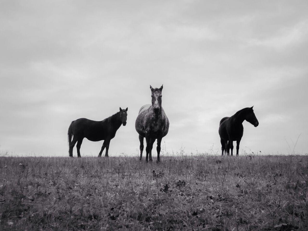 Beautiful stock photos of horse, Animal Themes, Animals In The Wild, Beauty In Nature, Cloud - Sky