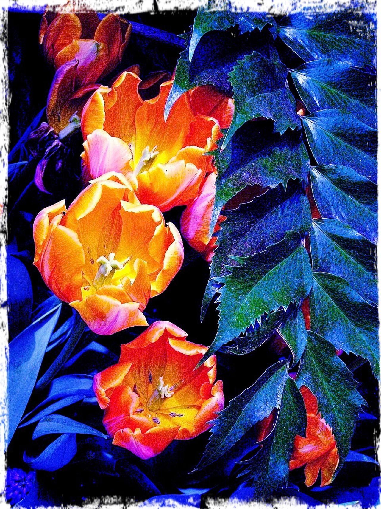 Flowers summer Outdoors garden Park tulips Orange Tulips nature Blue Shade light and dark Sunshine And Shade Stark Contrast