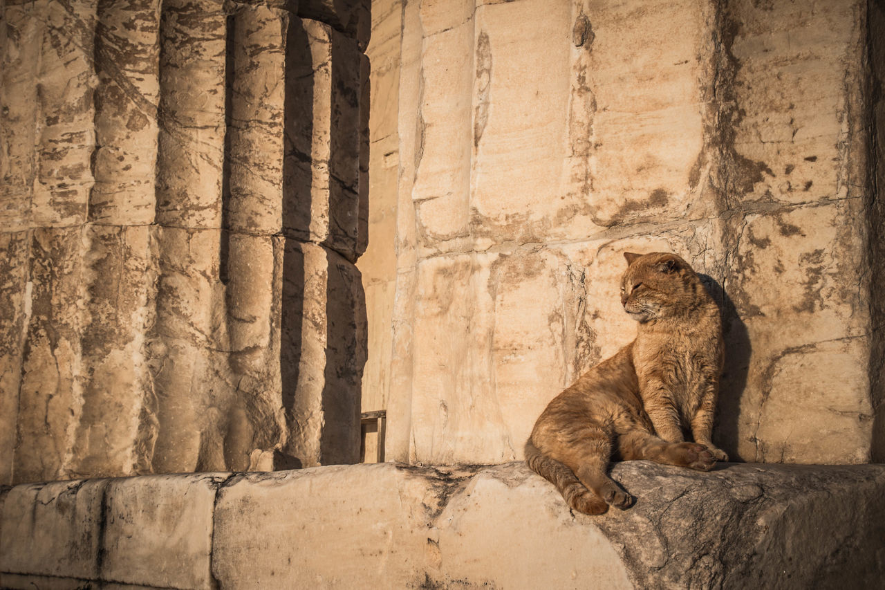 Acropolis Acropolis, Athens Architecture Architecture_collection Athens Greece Athens, Greece Cat Cats Cats Of EyeEm Cats 🐱 Catsoftheworld City Parthenon Parthenon Acropolis Greece Ruins Ruins Architecture