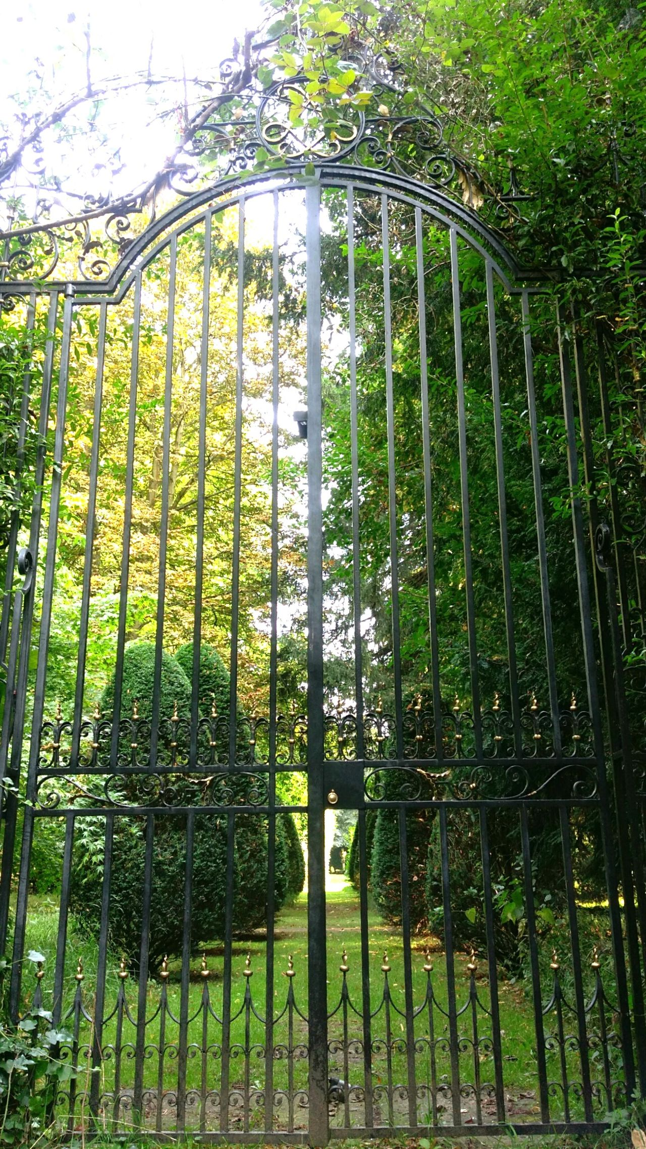 What Lies Beyond... Gates Gate Gateway Path Trees Treelined Discovery Locked Gate Pathway Sunny Day Shaded EyeEm Gallery Shady Trees Android Photography Android Secret Garden HTC_photography
