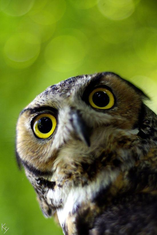 My Best Photo 2015 'cause i'm not a birdwatcher neither i had a tele-macro lens.. just 50mm Manual Focus ! Pentax K-5 Birds Owl Bird Photography EyeEm Best Shots - Nature Nature_collection Eyes Birds_collection Colseup Bokeh EyeEm Best Shots
