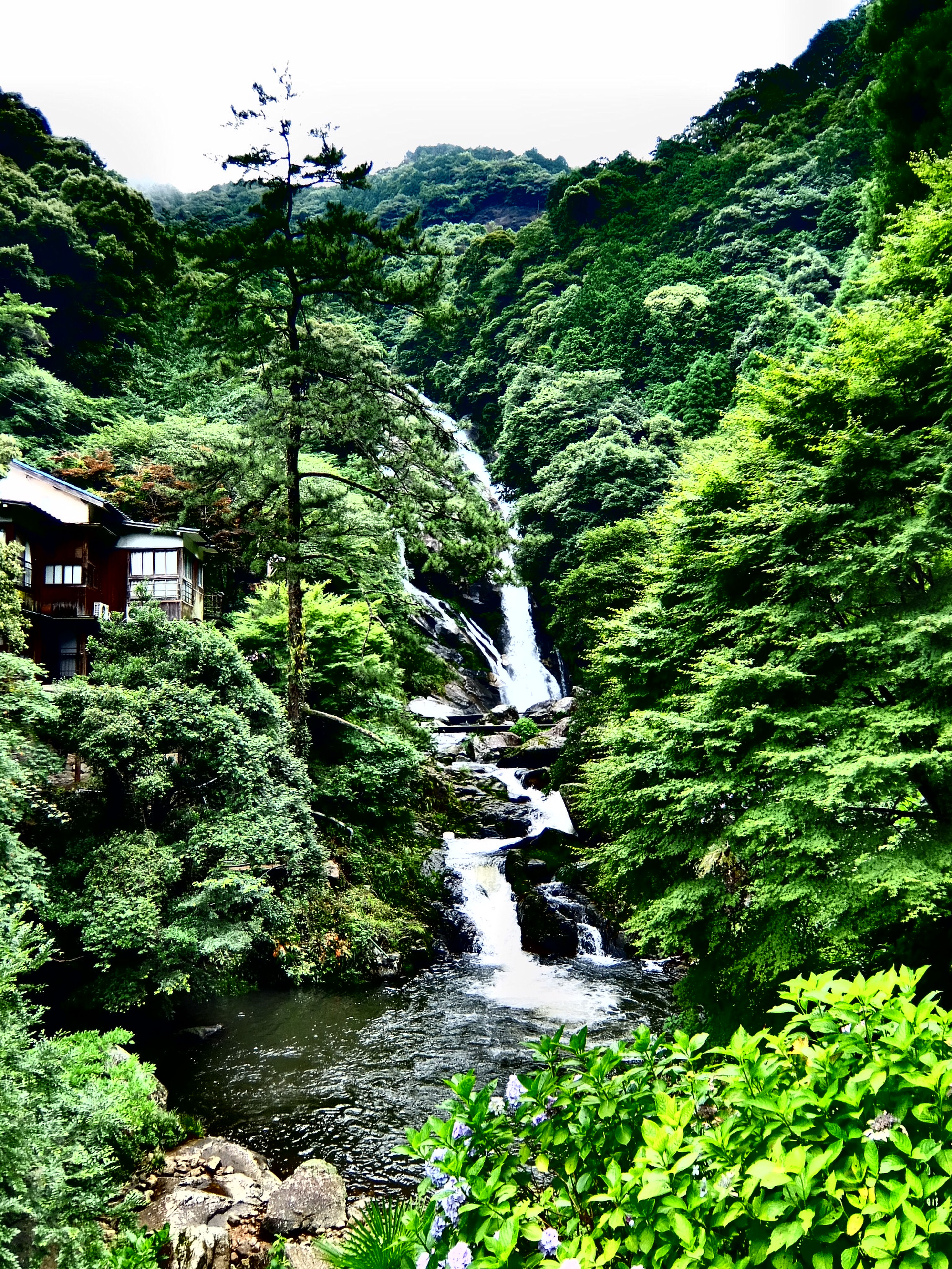 Green Waterfall The Mikaeri Falls 見帰りの滝