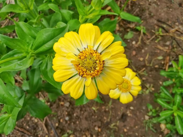 Flower Yellow Plant Petal Nature Flower Head Leaf Beauty In Nature Eco Tourism Close-up Botany Nature Reserve Outdoors Fragility Summer Outdoor Pursuit Multi Colored Blossom Freshness Green Color