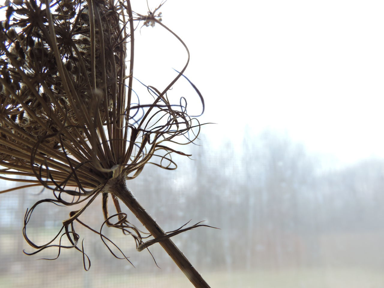day, outdoors, no people, focus on foreground, close-up, nature, dried plant, tree, beauty in nature, sky