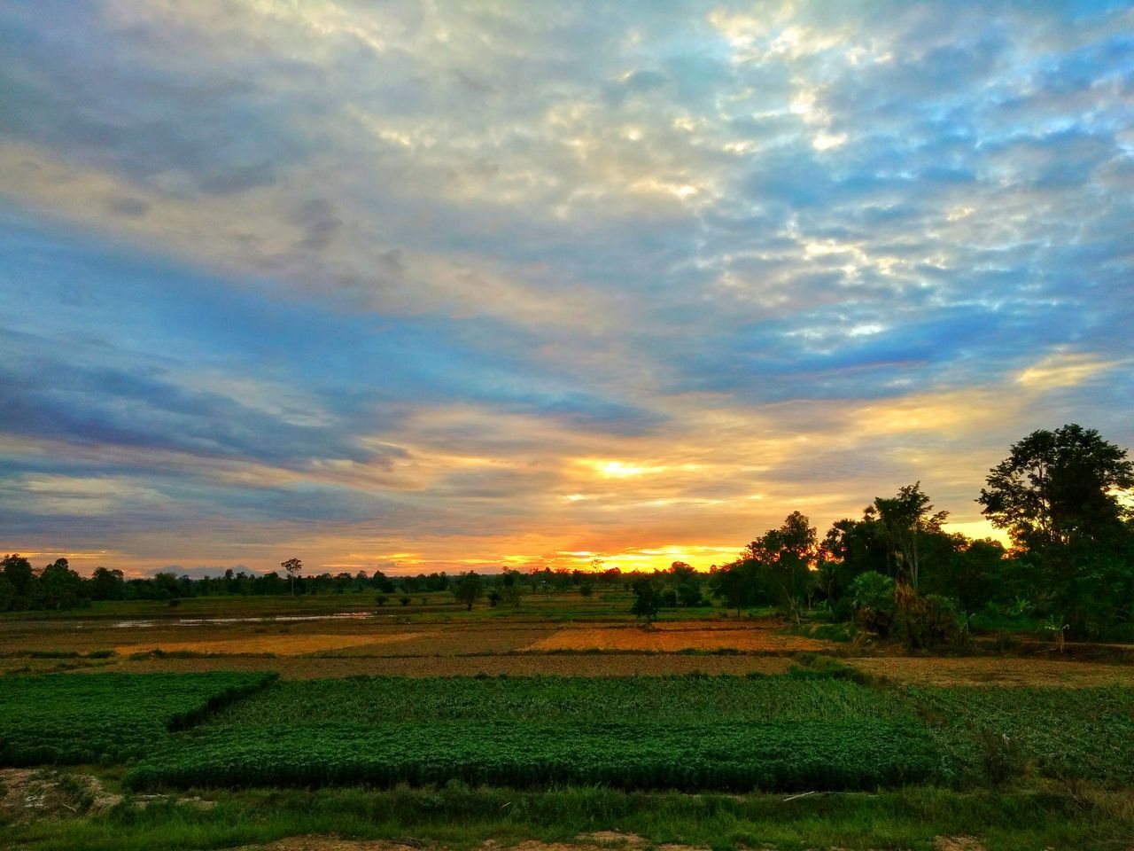 field, tranquility, landscape, nature, beauty in nature, agriculture, tranquil scene, scenics, cloud - sky, sky, tree, sunset, no people, rural scene, growth, grass, outdoors, day