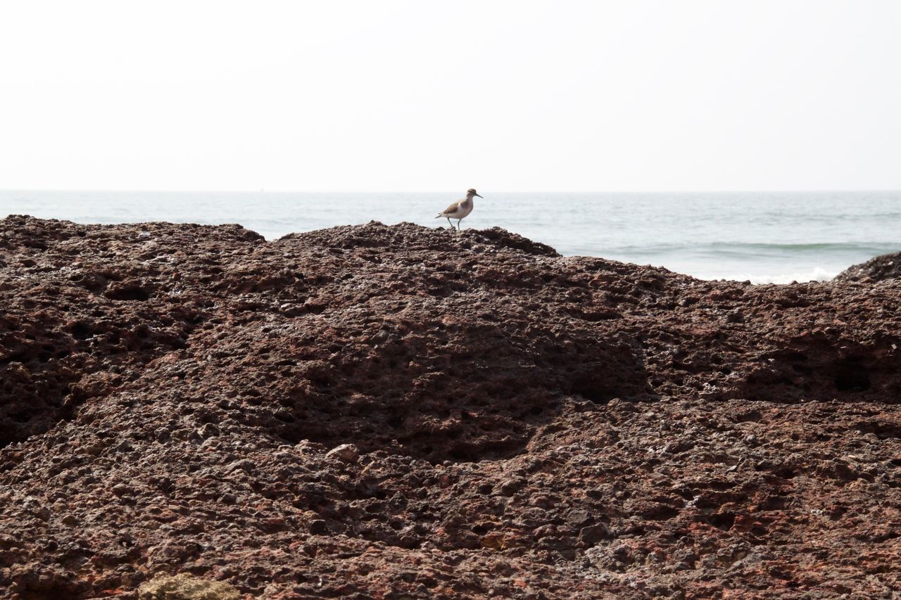 Ashvem Ashvem Beach Beach Beauty In Nature Bird Goa Horizon Over Water Nature Outdoors Rock - Object Scenics Sea Tranquil Scene Tranquility Water