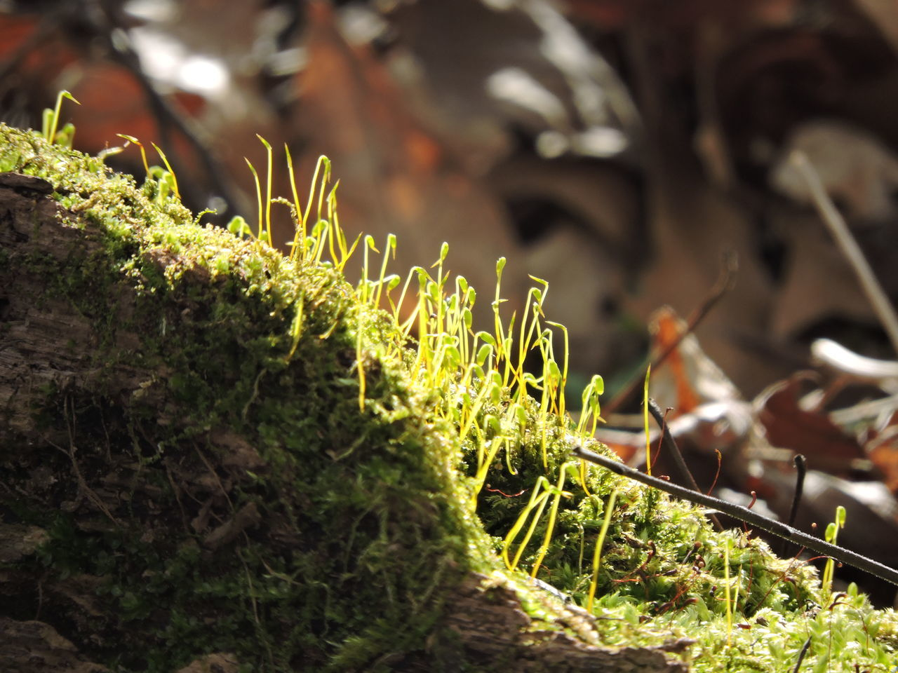 Close-up Day Green Color Growth Leaf Mossy Nature No People Outdoors Plant Sunlight Sunlit