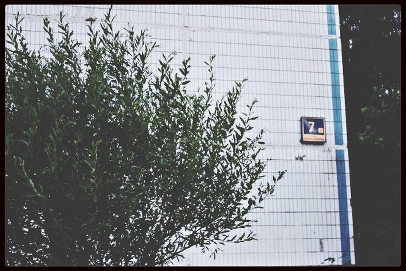 Building Seven SZAO Tree