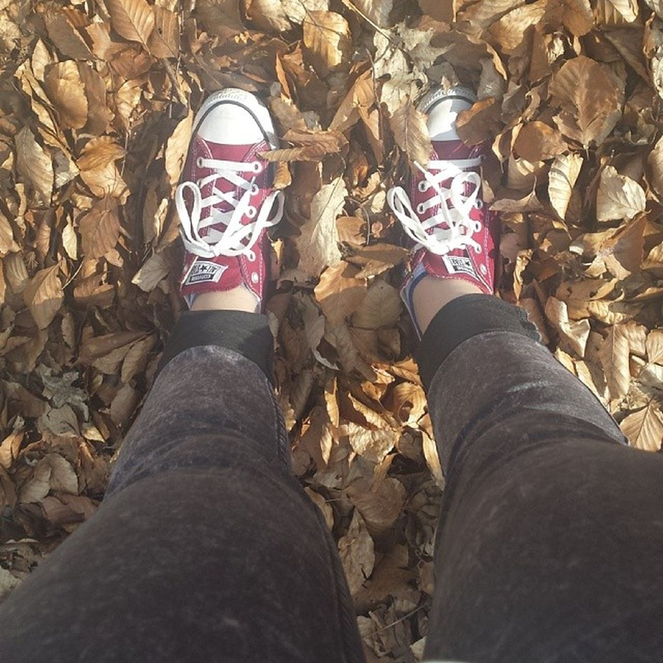??? Allstars Converses Leaves Autumn walked5km