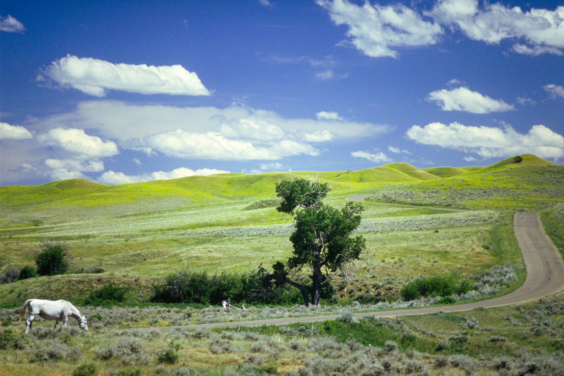 Beauty In Nature Big Sky Big Sky Country Cloud Custer's Last Stand Grass Grassy Grazing Horse Landscape Little Big Horn Little Big Horn National Monument Livestock Montana Nature Pasture Sky Tranquil Scene Tranquility USA White Horse