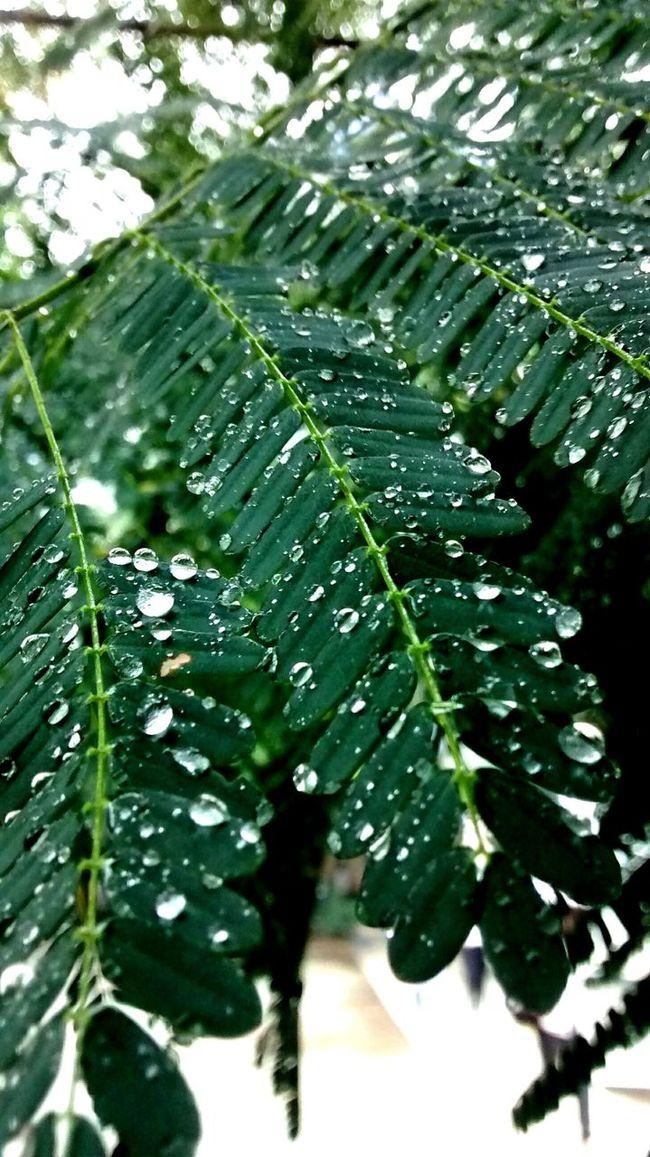 Dia frio porem inspirador fara fotografar pequenos orvalhos ?? Orvalho Naturaly & Perfect Beautiful Day Green