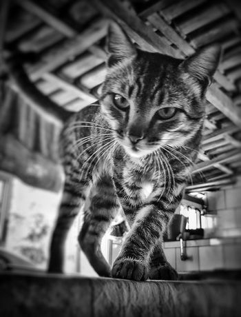 Cat Gatos GatosFelices Gato😽 Cats Of EyeEm Cat Lovers Catlovers Cats Cat♡ Cats 🐱 Catoftheday Cat Photography Cat Watching Gatto😸 Gatti Gatos 😍 Gatosfelizes Gatos Fofos GatosGuardianes猫猫猫
