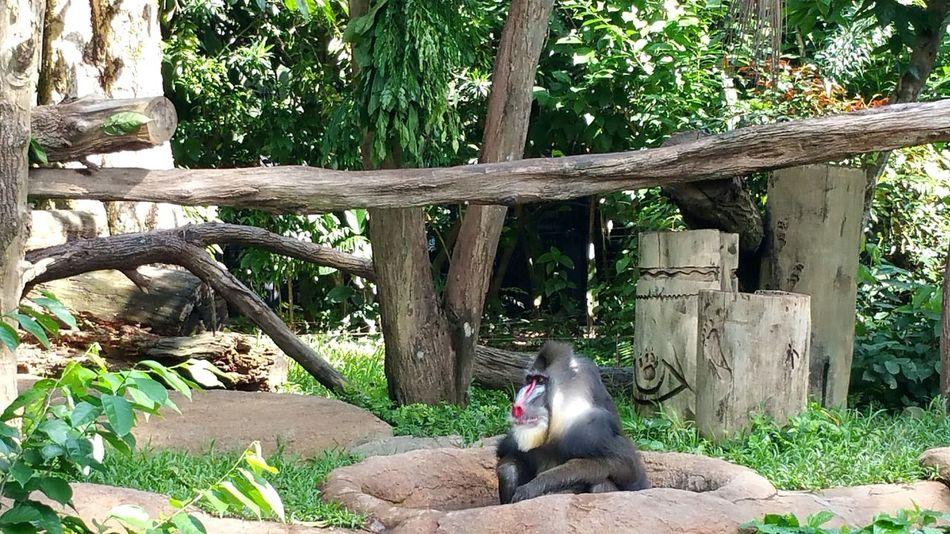 are you looking @ me? Randomshot Taking Photos Singapore Singapore Zoological Garden Animals