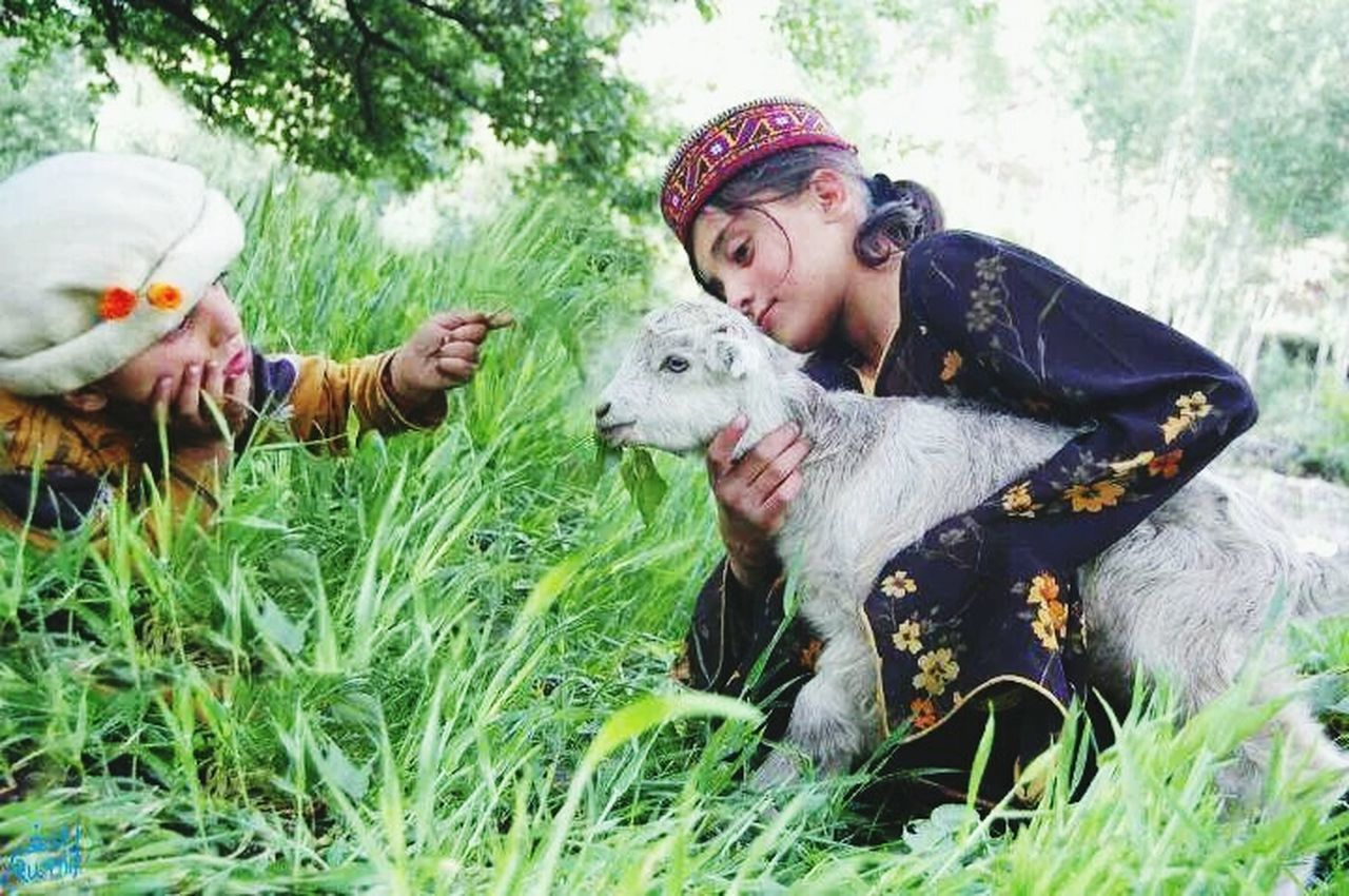 Hunza Valley Beautiful Pakistan Cultural Cute Kids Goat Photography Summer Time  Kids Having Fun Kids Playing Landscape_Collection