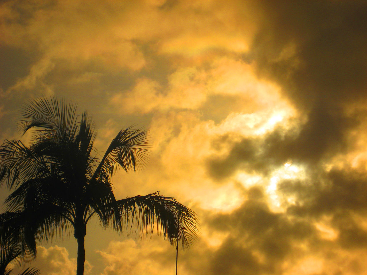 Low Angle View Of Silhouette Palm Trees Against Sunset Sky