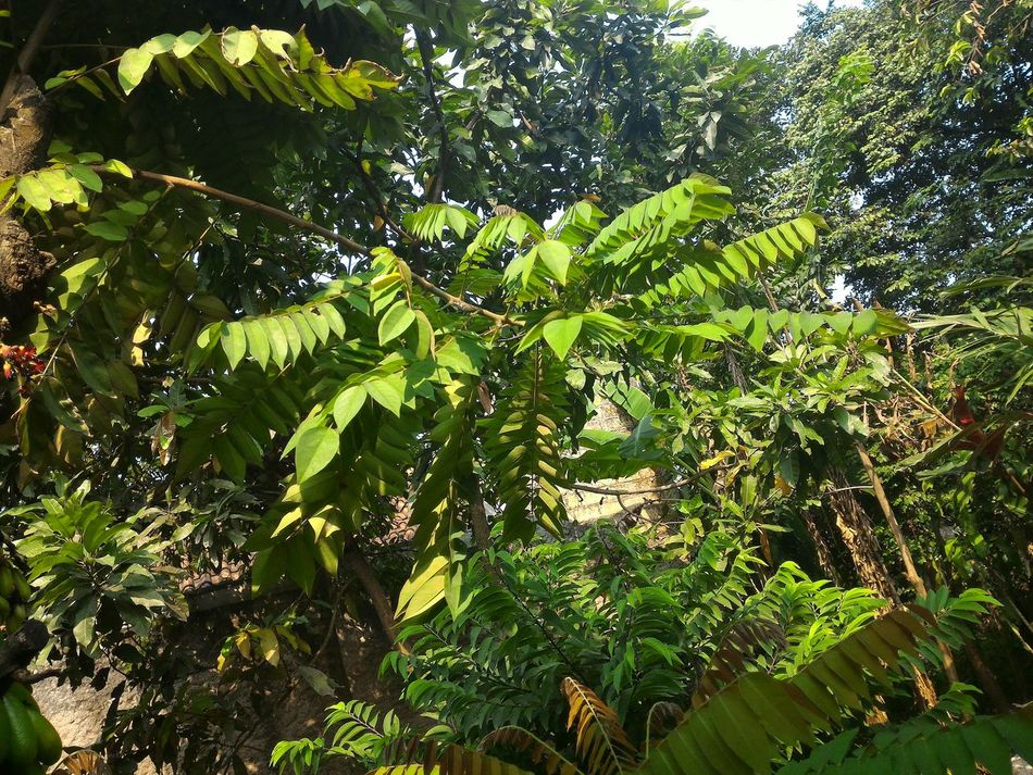 Beatiful Kakikuk.tk Plants 🌱