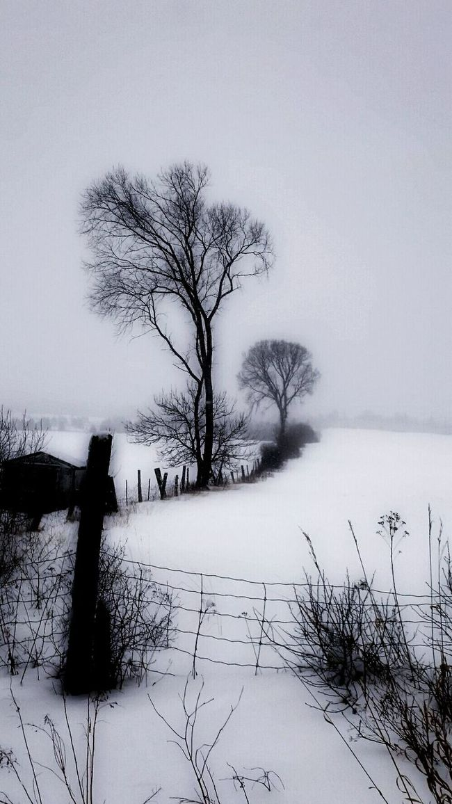 ...on the side of a country road... Showcase: January Countryside Country Road Snow Covered Snow ❄ The Trees Sony Xperia Eyeemphotography Freezing ❄ Freezingweather Beautiful World From My Point Of View Frozen Nature Fencepost
