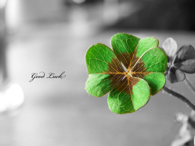 Good Luck Awesome Taking Photos Green