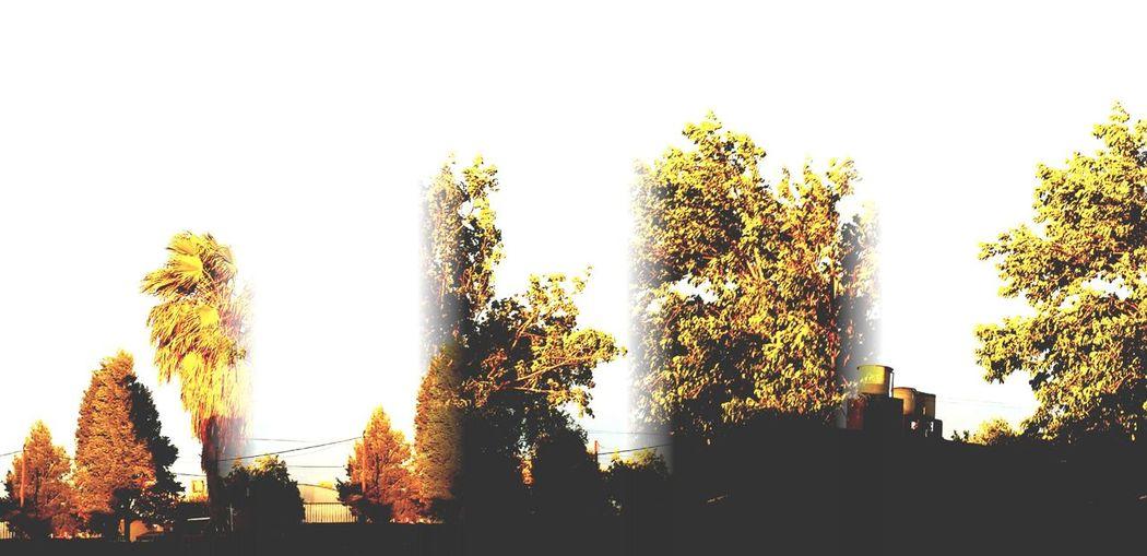 Panorámica Sol