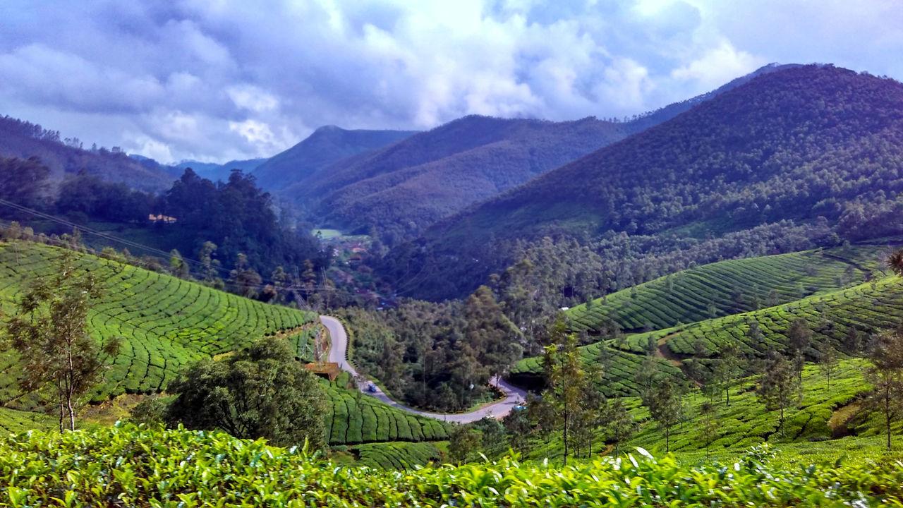 Kerala Roadtrip Mountain Tea Plantation  Nature Landscape Mobilephotography