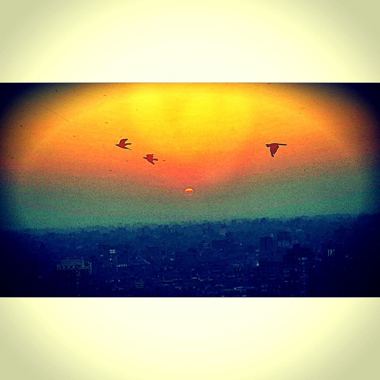 Flying No People Nature Beauty In Nature Sky Sunset Sunbird Photoshoot Editorialphotography Edit Mobile_photographer