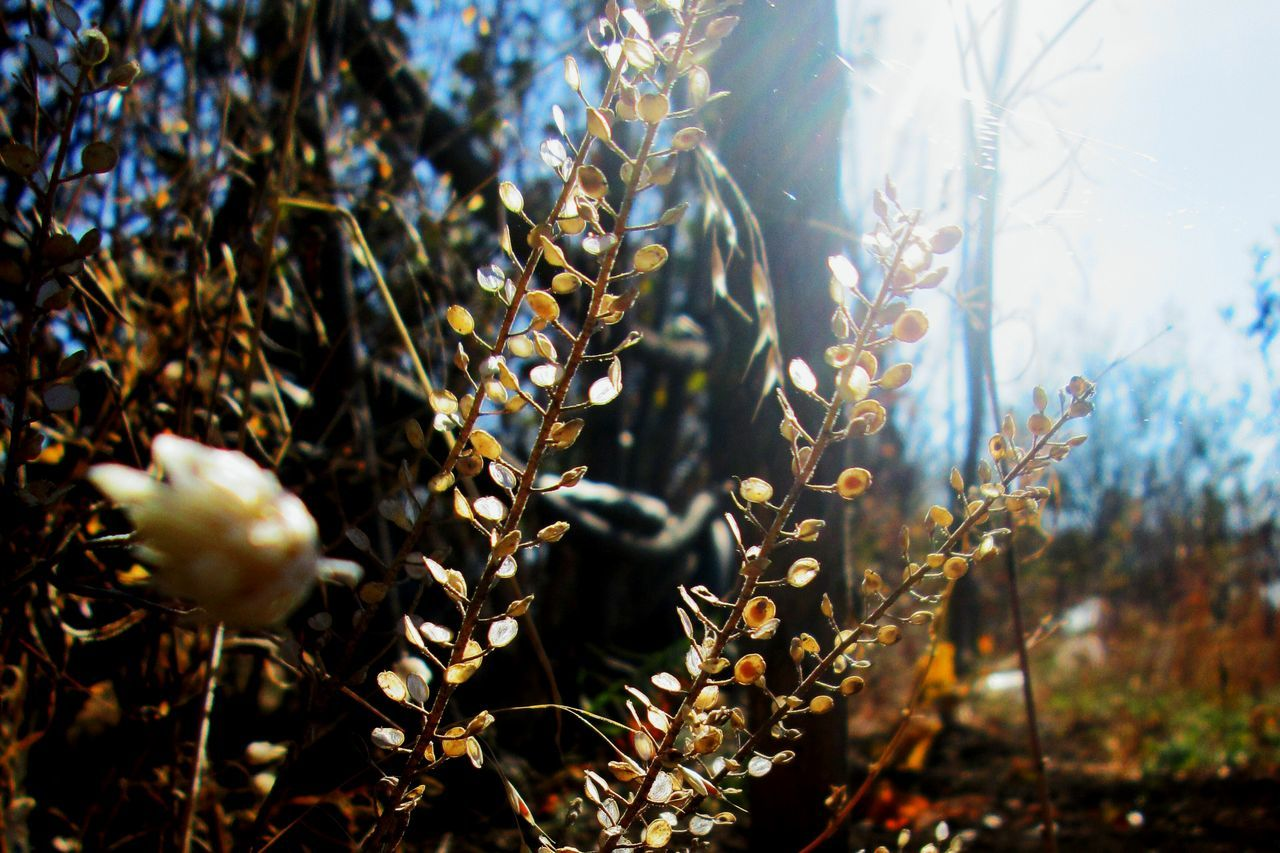 growth, nature, plant, beauty in nature, no people, day, sunlight, outdoors, close-up, fragility, freshness