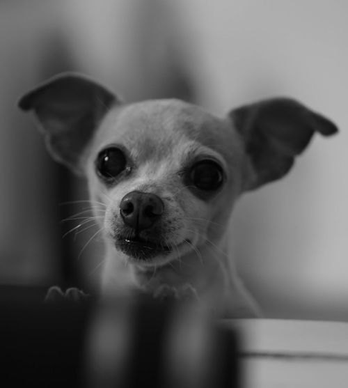 | Peekaboo | Ourdog Dog DogLove Blackandwhite Taking Photos No People Animal EyeEm Gallery Eye4photography  EyeEm Animal Love Animal Head  EyeEm Best Shots - Black + White Bnw Bnw_collection Bnw_captures Bnwphotography Everyday Lives Capture The Moment Pets Dog Love Dogs Dogs Of EyeEm Bnw_life