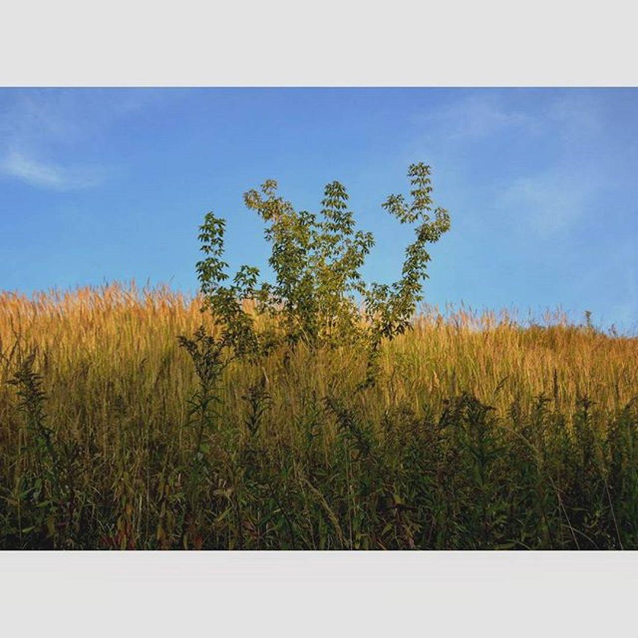 Samotne Drzewko łąka