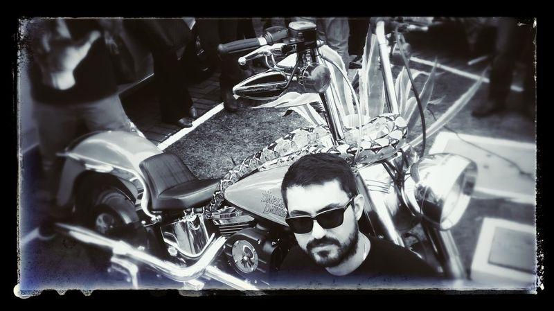 Look at snake she loves motocycle Motocycle Custom Bikes Harley Davidson Snakes