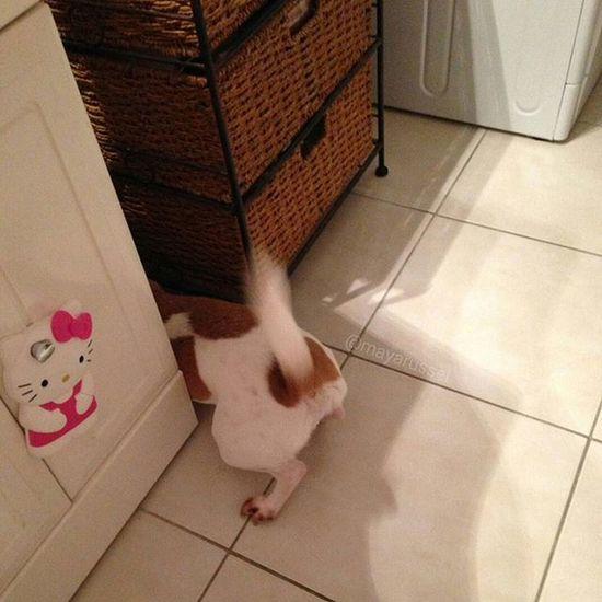 Au secours ma balle est en dessous ! Help 😨😱😞😩😩 ----------------------------------------------------------------------------- Follow my friends @spitz_kashoo @mavie_de_chien @nouvelleviepourtoi @_lady.dog_ ----------------------------------------------------------------------------- Jackrussellinstagram Instadog Dogstagram Ilovemydog Ilovemyjackrussell Animalsofinstagram Animallover Dogselfie Ilovemyjackrussell Lovedogs Jackrussell Dog Jackrussellterrier Cutedogs DogAndChild Instadogs Jackstagram Mydogiscutest Dogs_of_instagram Ilovemyjrt Parsonrussell Instapet Instaanimal Jackrussellsofig dogoftheday doglovers work monday hug Ball