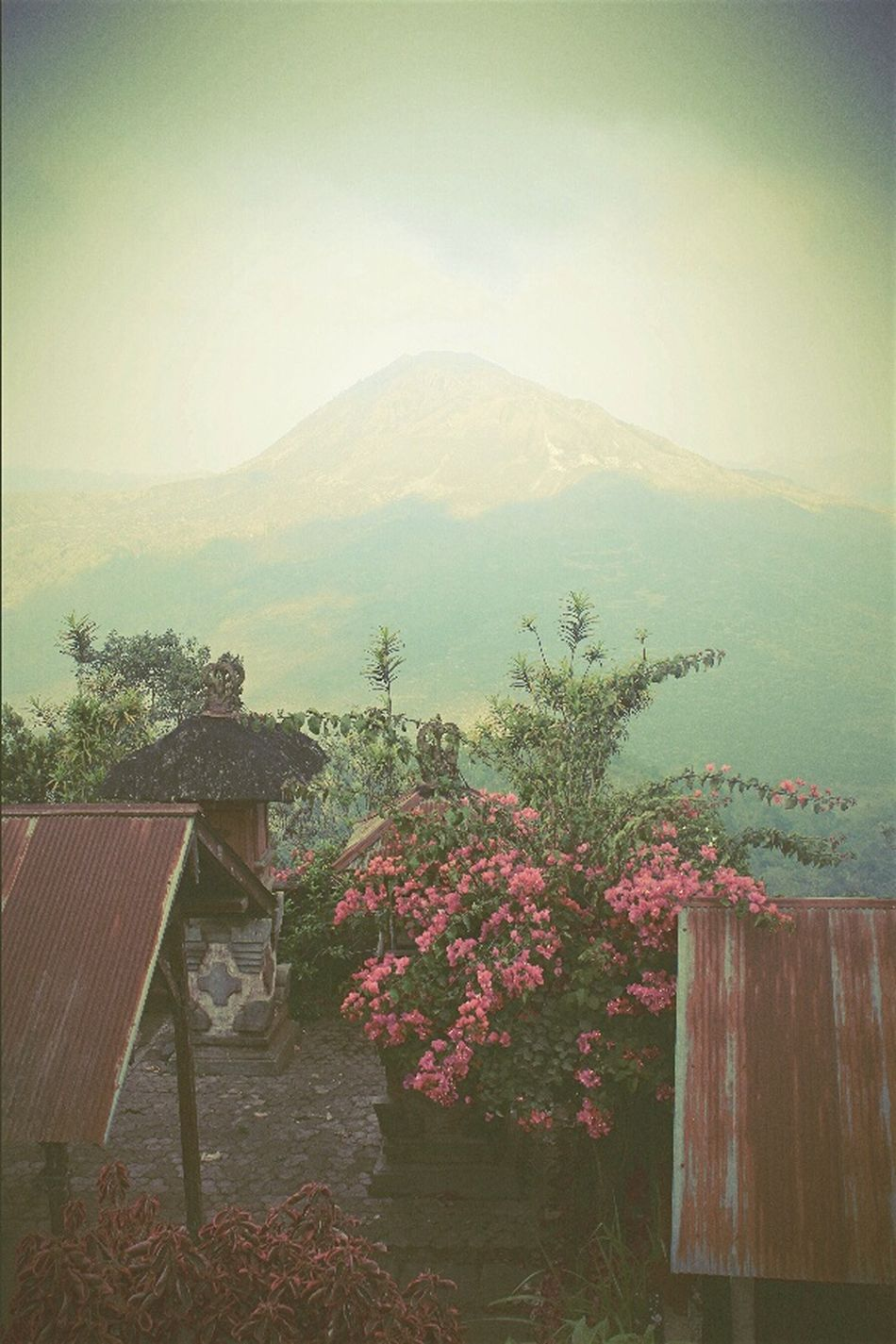 Garden With A View Relaxing Mountain View Hicking Lomography Mountains And Sky Mountain_collection PEAKTOgraphy Peak Nature Photography Nature Nature_collection