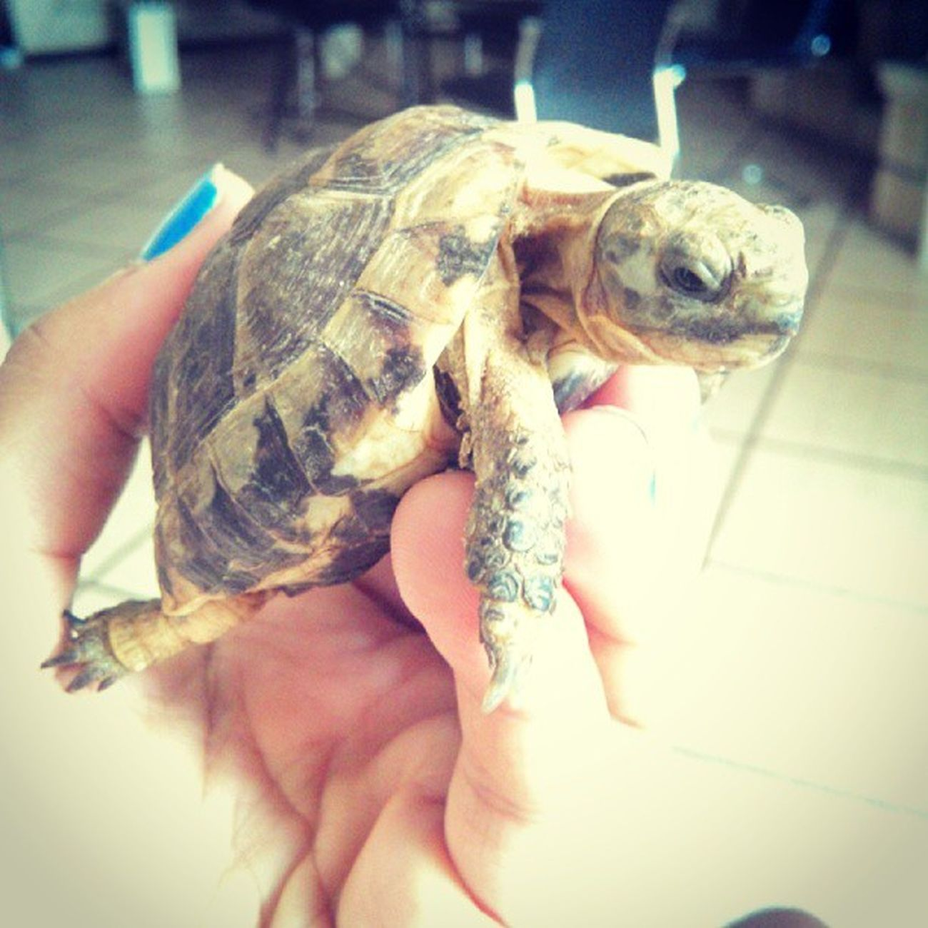 Cet animal est trop cool. Turtle Tortue Miniscule
