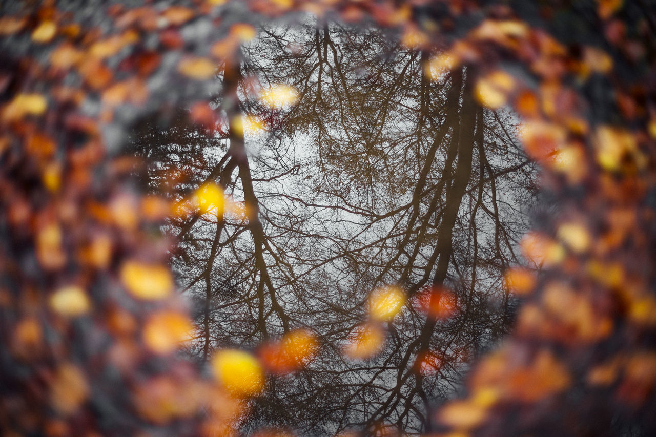 Mirror Reflection Reflection Reflections Reflections In The Water Reflection_collection Autumn Autumn Colors Autumn Leaves Autumn🍁🍁🍁 Autumn Collection Autumn Colours Trees Bare Tree Bokeh Reflection Perfection