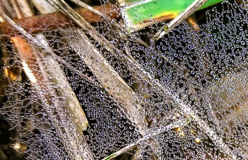 Morning Dew On Spider Web Dew Do The Dew Droplets Close-up My Year My View Macro Still Life First Eyeem Photo L3 Nature Landscapes Wet Yet Textured  Pattern Web Webbed Water Webbed The City Light
