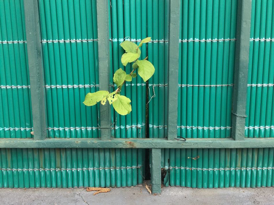 Green Color Flower Leaf Day Yellow Outdoors Multi Colored No People Beach Architecture Nature Corrugated Iron Eyeem Market Art Is Everywhere